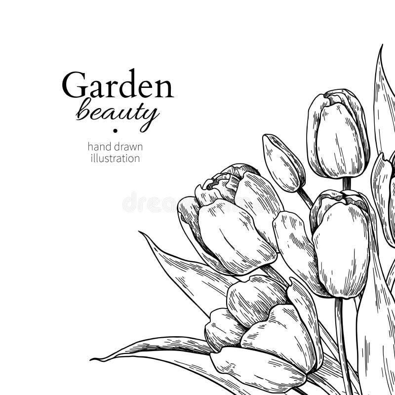 Flor e folhas da tulipa que tiram a beira Quadro floral gravado tirado mão do vetor ilustração do vetor