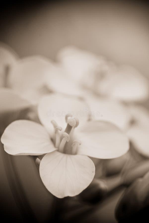 Flor e hierba verde en jardín fotografía de archivo