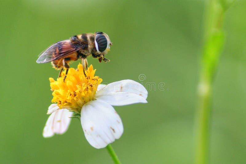 Flor e insecto imagen de archivo