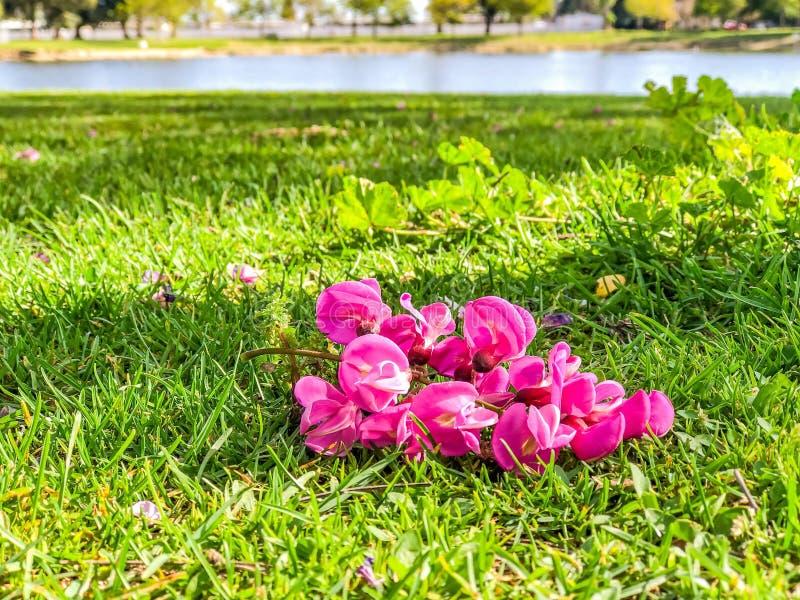Flor e lagoa do rosa quente imagens de stock royalty free