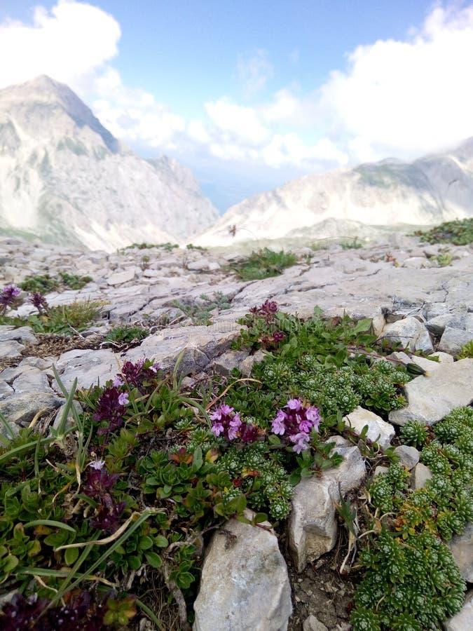 Flor e montanha imagens de stock royalty free