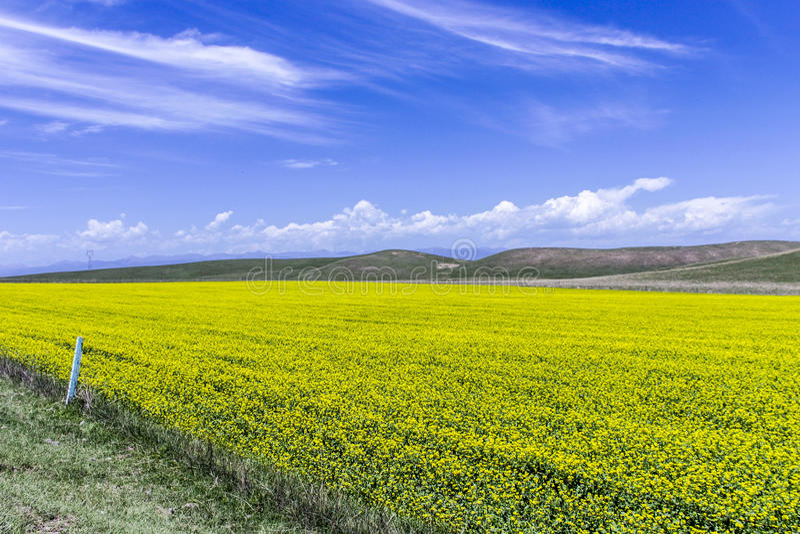 Flor e montanha do Cole imagens de stock