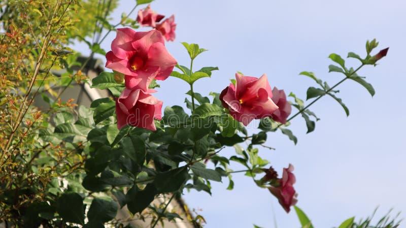 Flor e natureza bonitas imagens de stock