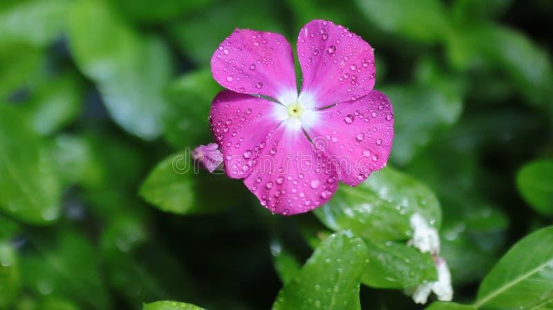 Flor e natureza bonitas fotografia de stock