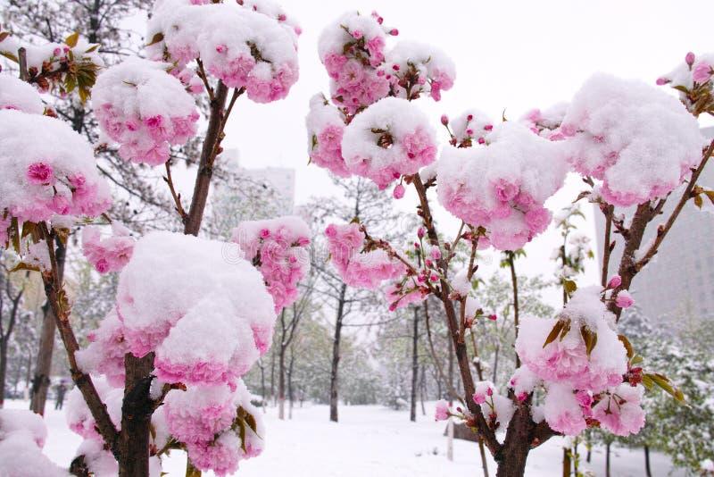 Flor e neve fotos de stock royalty free