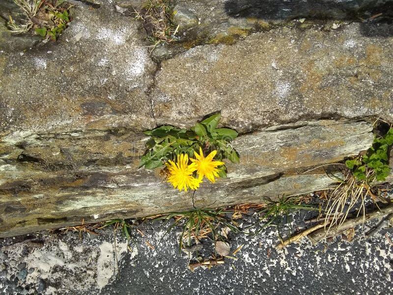 Flor e pedra fotos de stock