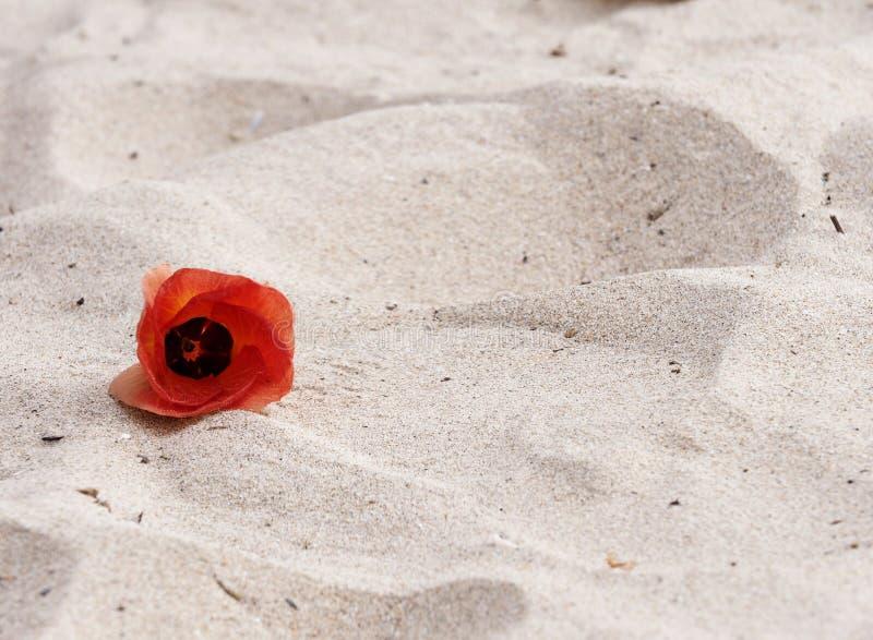 Flor e praia foto de stock