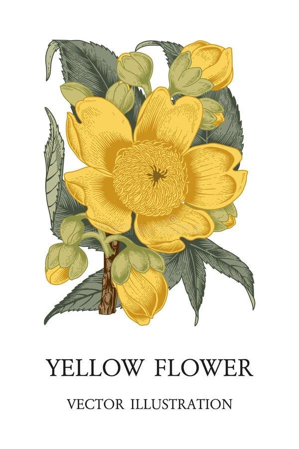Flor Ejemplo del vintage del vector Tema botánico stock de ilustración