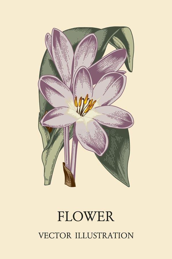 Flor Ejemplo del vintage del vector Tema botánico ilustración del vector