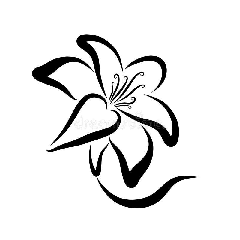 Flor elegante, lírio, contorno preto, haste e pétalas ilustração royalty free