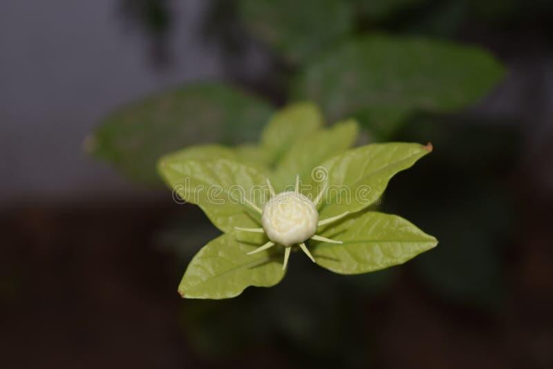 Flor em botão imagens de stock royalty free