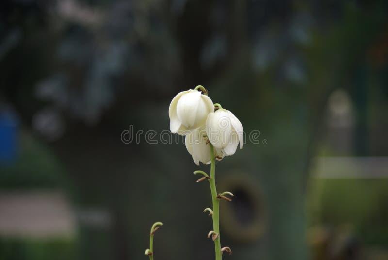 A flor em botão branco e o ‰ preto do ¼ do ¼ ˆ2ï do backgroundï fotografia de stock