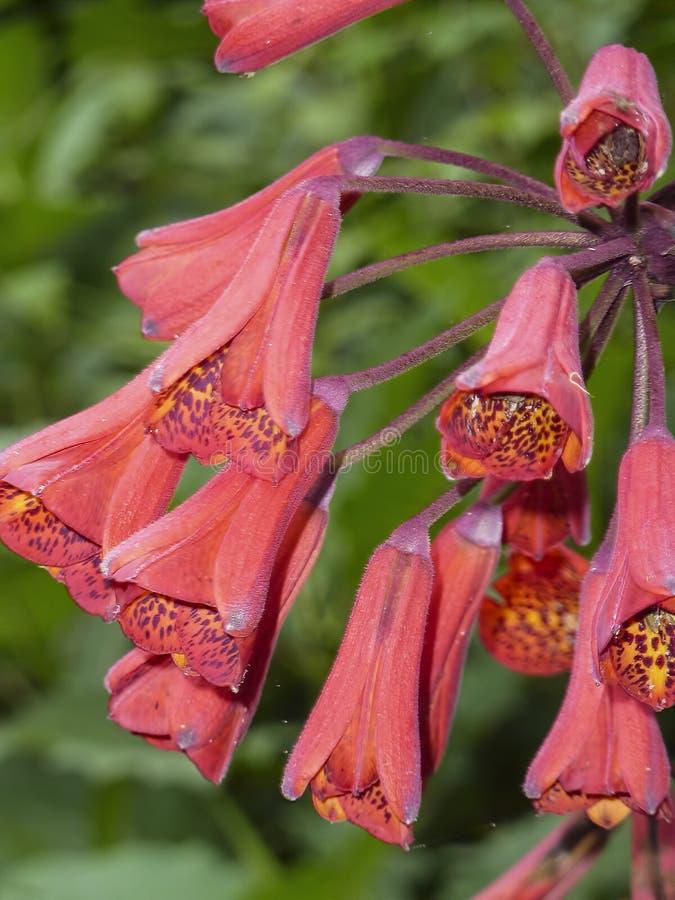 Flor em Costa Rica fotografia de stock royalty free