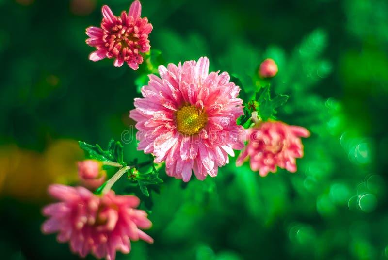 Flor em minha casa fotos de stock