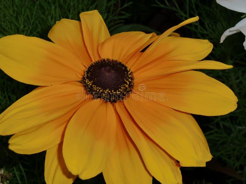 Flor em Ottawa no verão fotografia de stock royalty free