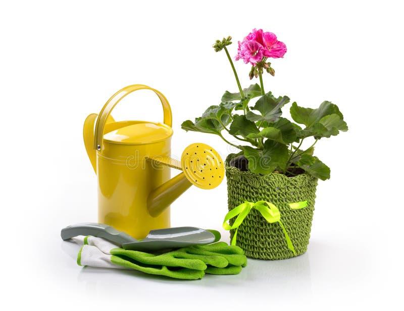 Flor em pasta do pelargonium e ferramentas de jardinagem no branco fotografia de stock