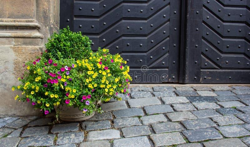 Flor em um potenciômetro no pavimento fotos de stock royalty free