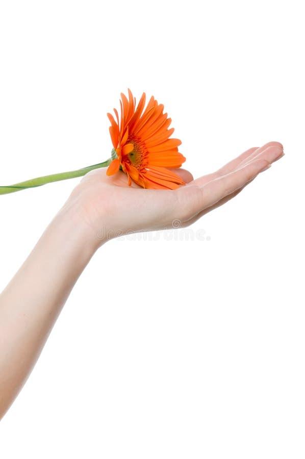 Flor em uma mão foto de stock