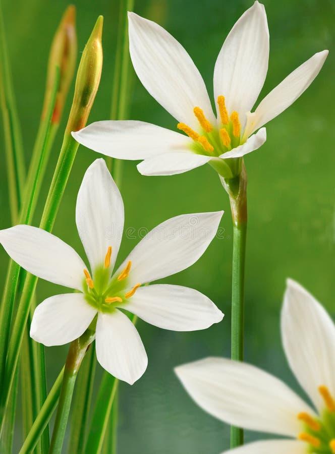 Flor en agua imagenes de archivo