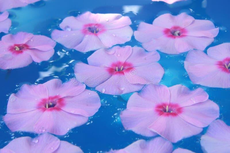 Flor en agua azul imagen de archivo libre de regalías