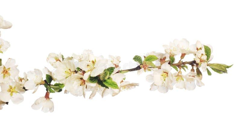 Flor en blanco fotos de archivo