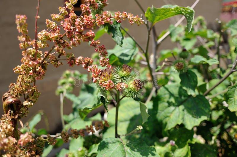 Flor en captura de 3 dimensiones por Nikon D3 fotos de archivo