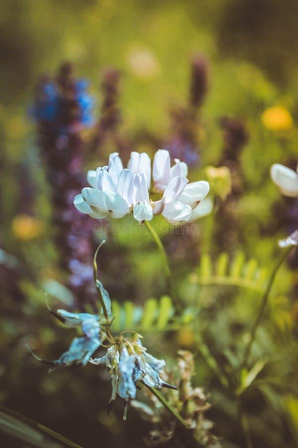 Flor en el campo foto de archivo libre de regalías