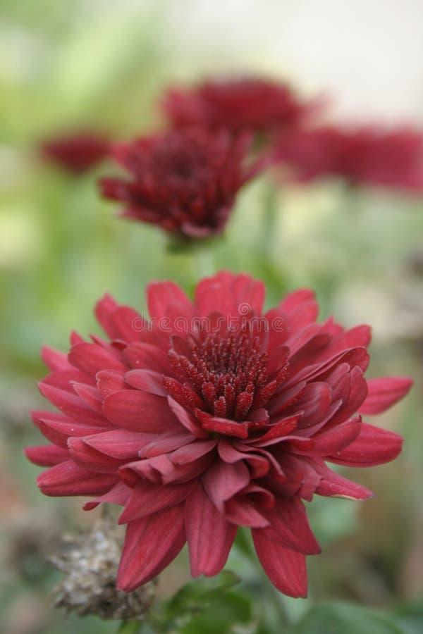 Flor en el exterior imágenes de archivo libres de regalías