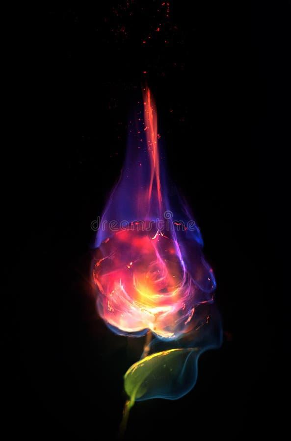 Flor en el fuego imagen de archivo libre de regalías