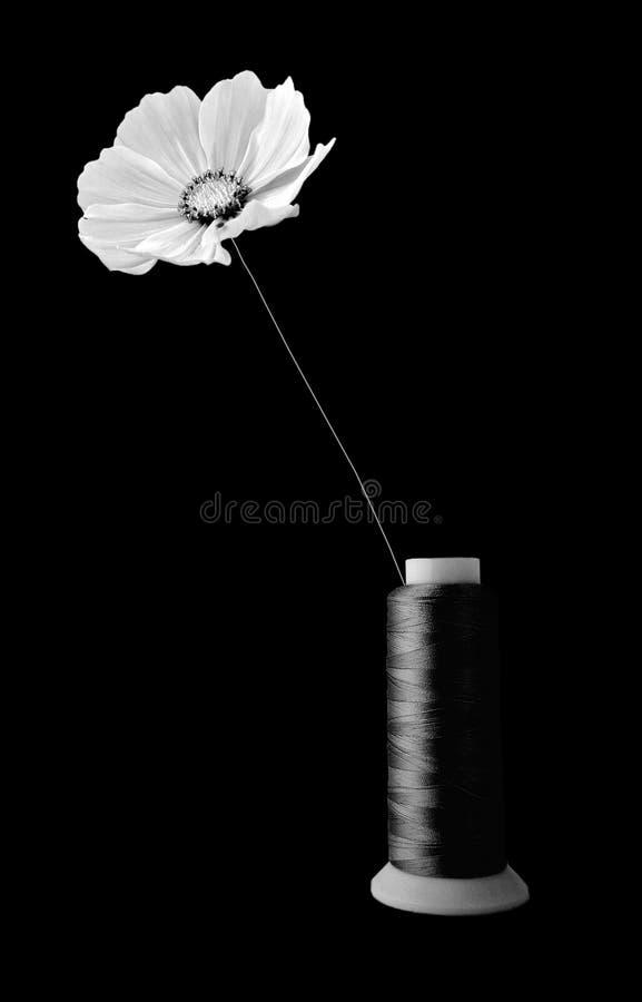 Flor en el hilo fotos de archivo