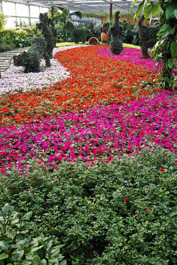 Flor en el invernadero. foto de archivo