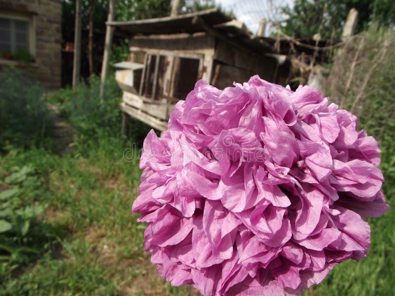 Flor en el jardín imágenes de archivo libres de regalías