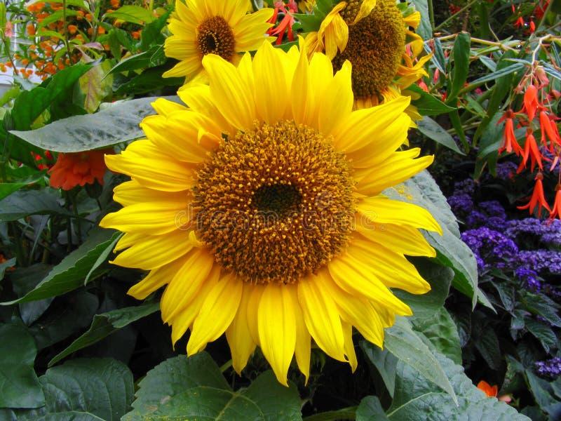 Flor en el jardín imagen de archivo