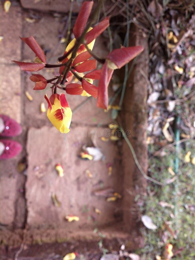 Flor en el jardín foto de archivo