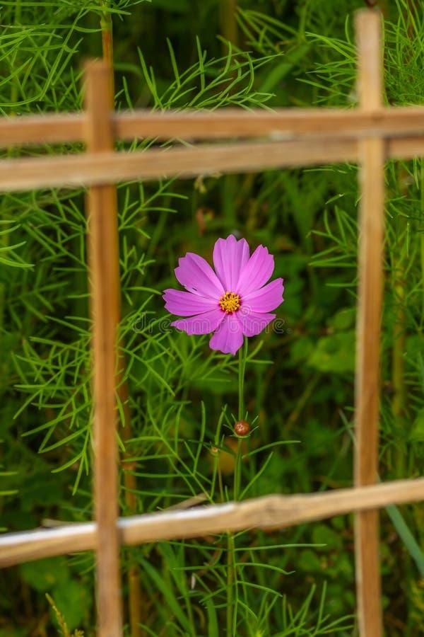 Flor en el marco imagen de archivo