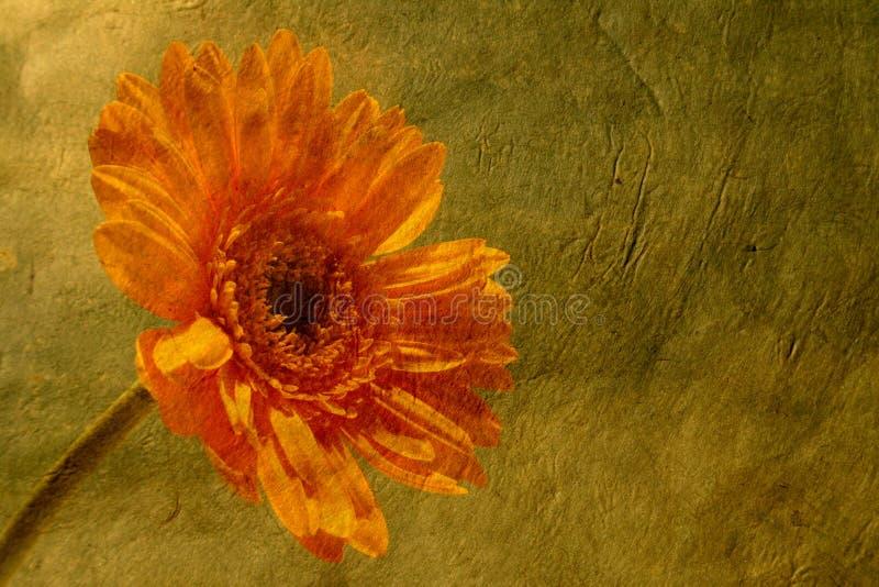 Flor en el papel fotos de archivo libres de regalías