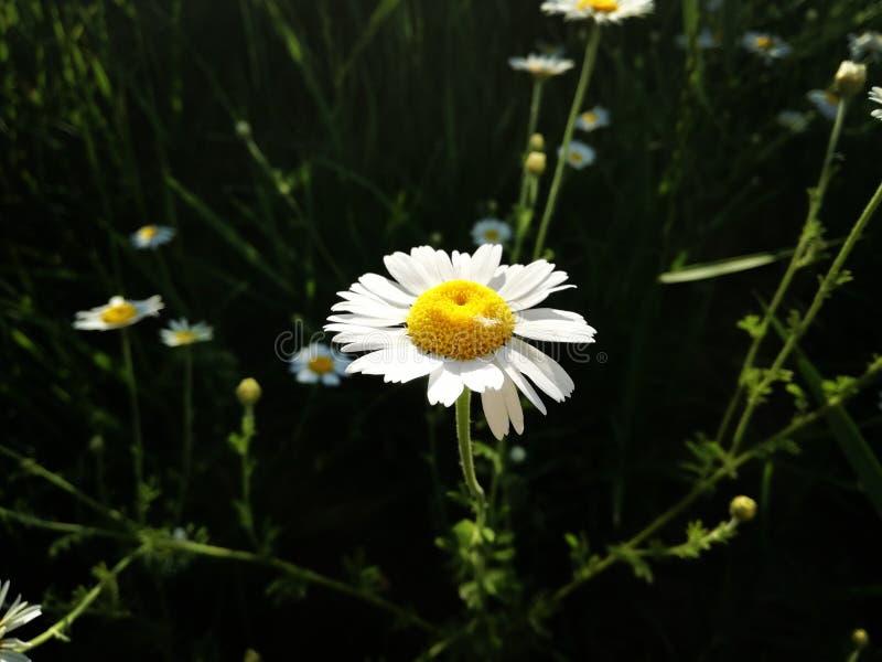 Flor en el parque imagenes de archivo