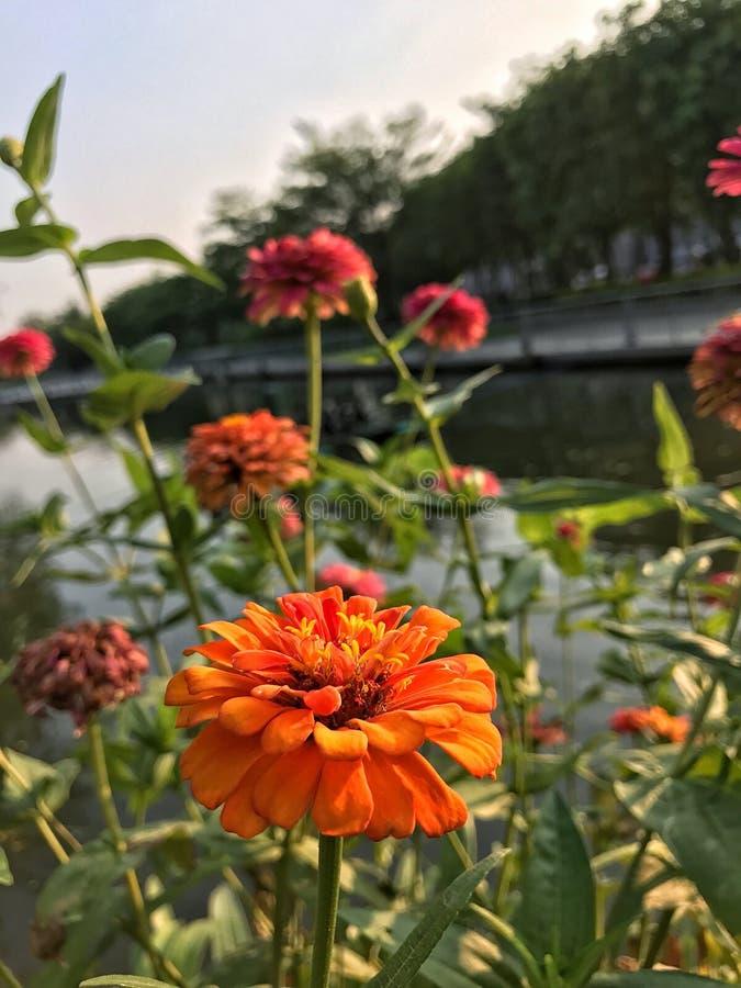 Flor en el parque foto de archivo libre de regalías