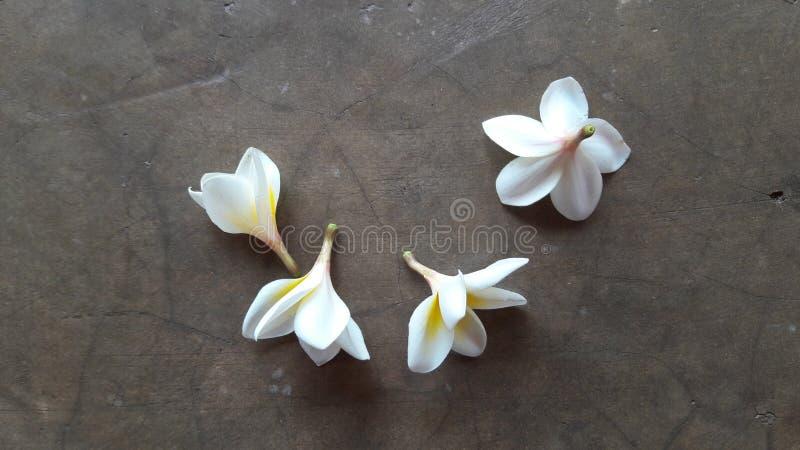flor en el piso imagen de archivo libre de regalías