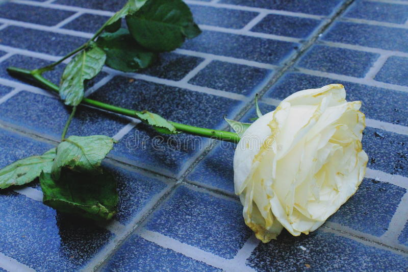 Flor en el piso negro fotografía de archivo