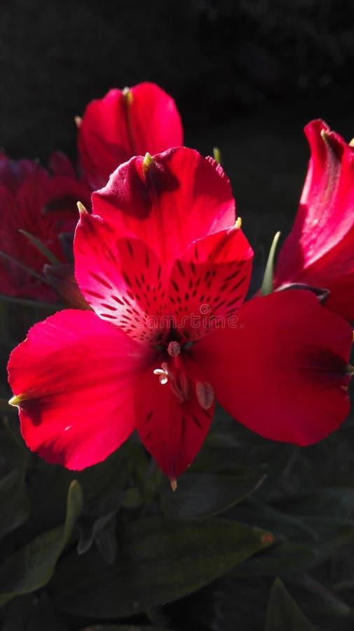 Flor en el sol del verano imagenes de archivo