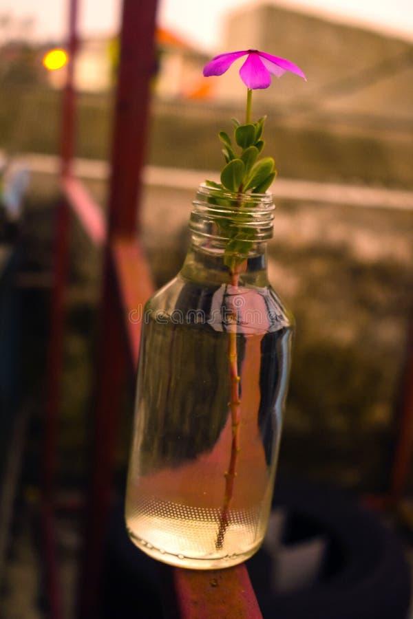 Flor en el tarro foto de archivo libre de regalías