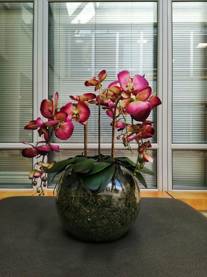 Flor en florero esférico imagenes de archivo