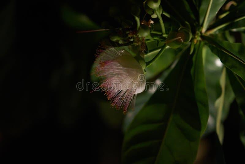 Flor en fondo oscuro en noche fotografía de archivo