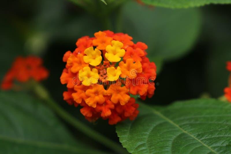 Flor en hado de la parte imágenes de archivo libres de regalías