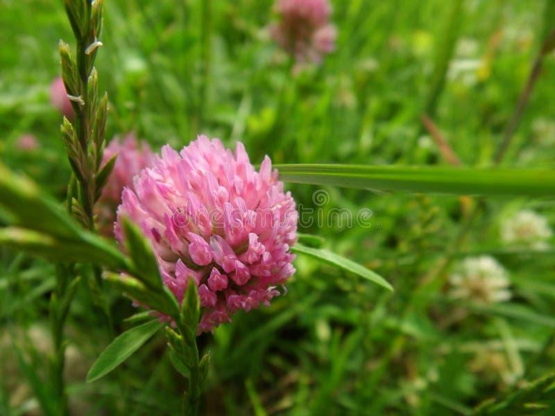 Download Flor en hierba foto de archivo. Imagen de verano, color - 41910300