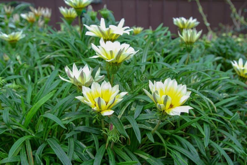 Flor en jardín en Singapur foto de archivo