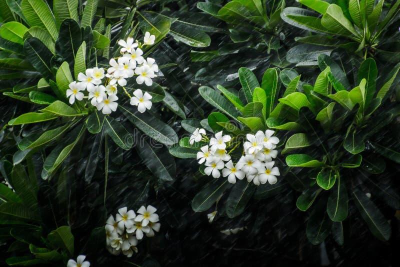 Flor en la lluvia foto de archivo libre de regalías