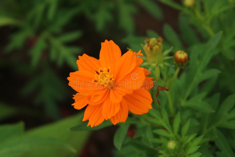 Flor en la parte caugiay fotos de archivo