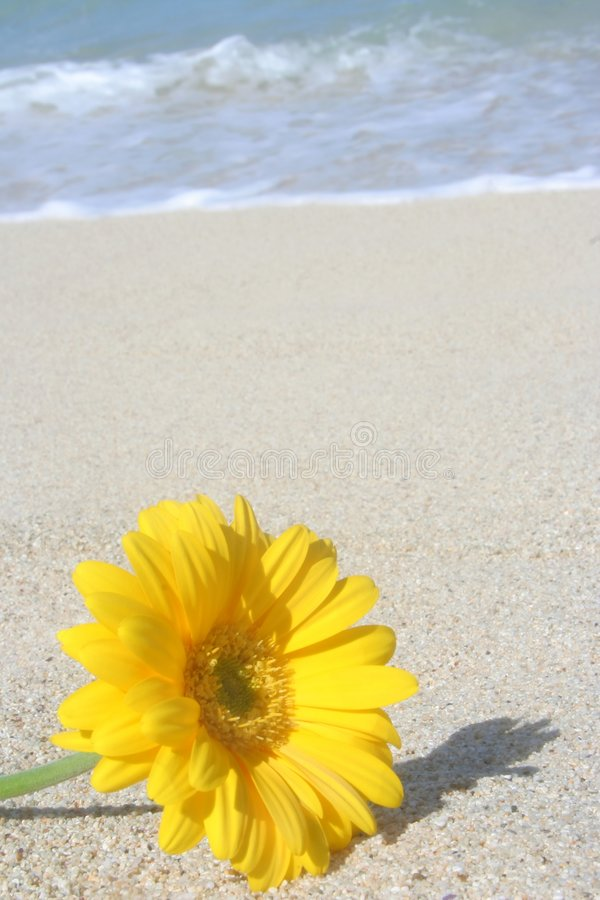 Flor en la playa foto de archivo libre de regalías